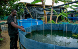 Le Gabon renforce son aquaculture